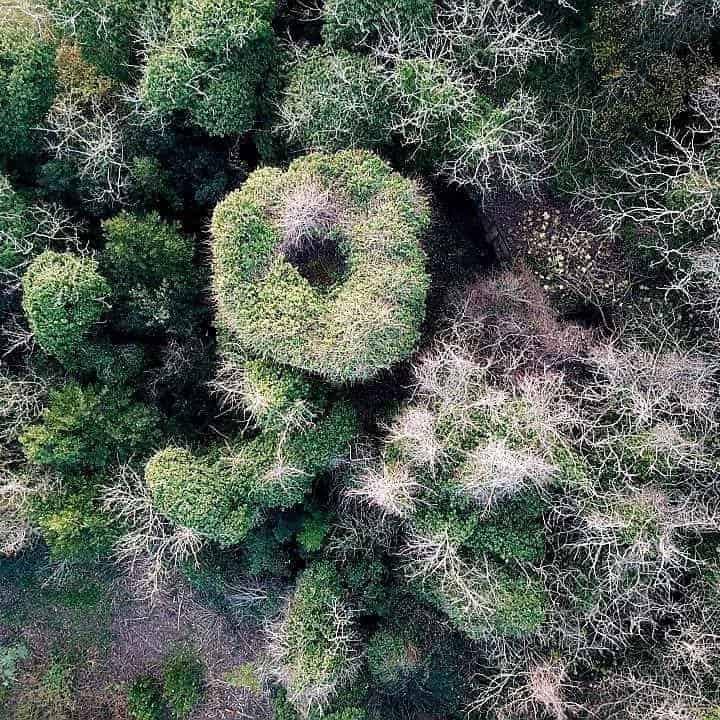 Rassegna sul paesaggio 2019 #1 Abbraccia e difendi i tuoi alberi