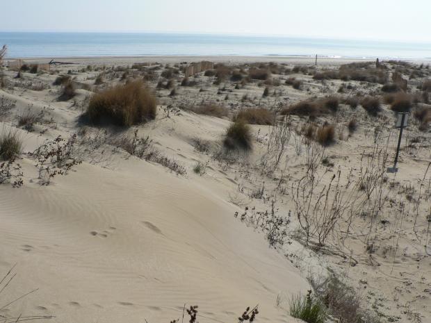 Rassegna sul paesaggio#3 Passeggiata Naturalistica al litorale dell'Ospedale al Mare