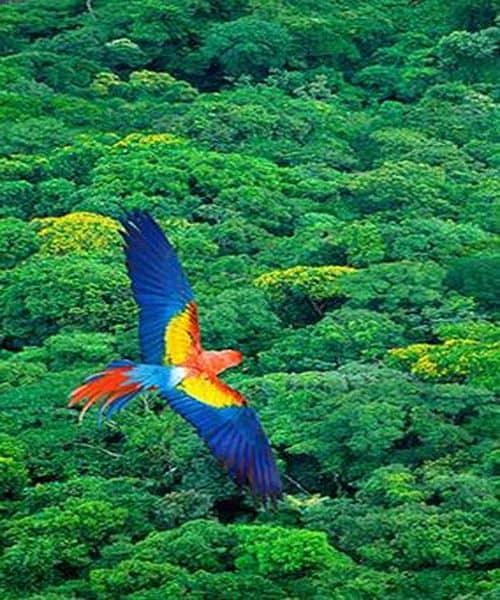 FORT in FEST: Amazzonia & Brasile